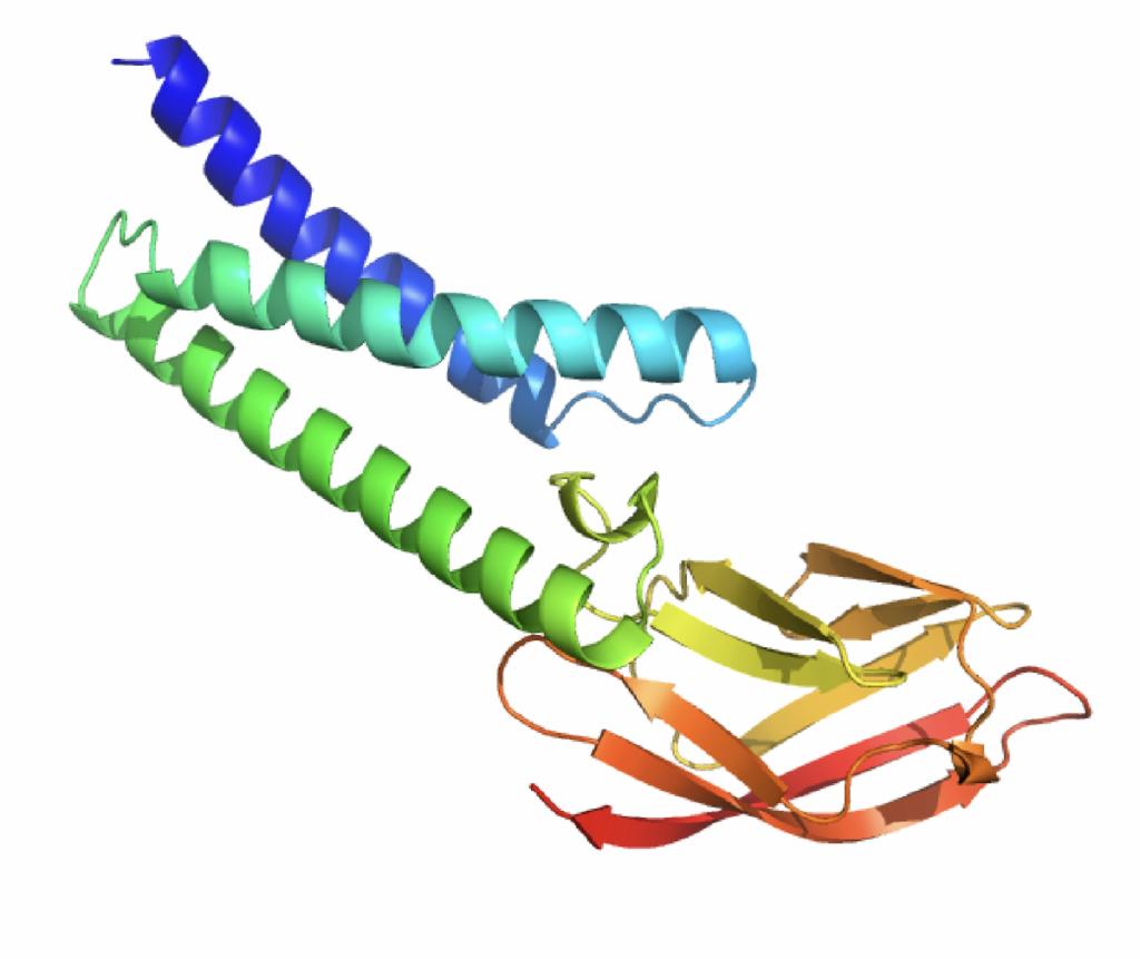 modélisation de protéines du Covid-19